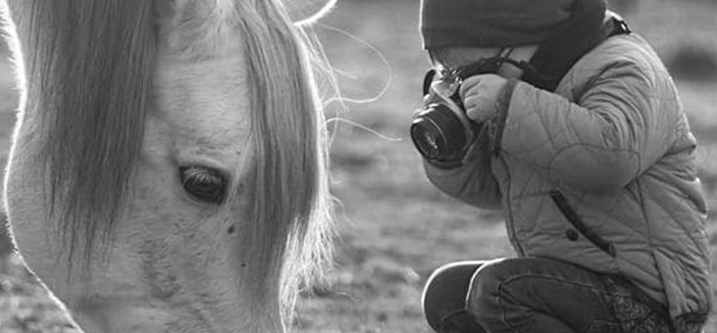 Concorso Fotografa il Tuo cavallo